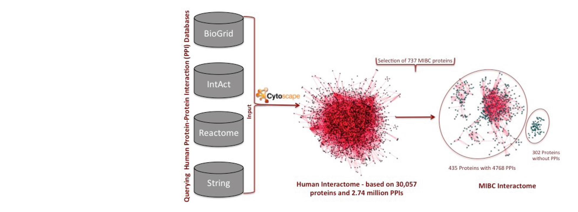 Generating the muscle invasive bladder cancer interactome.